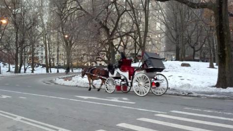 Horse Central Park