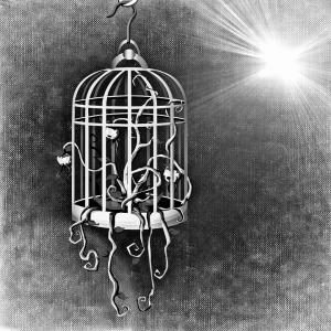bird-cage-687693_960_720
